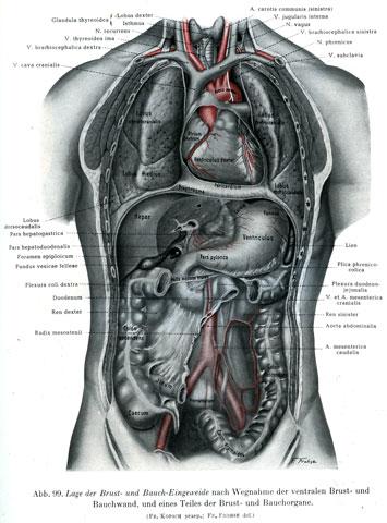 オステオパシーの考え 参考画像